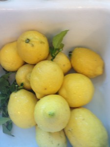 One of the benefits of living in California is being able to grow your own Lemons.